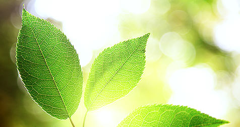 Pflanzenblatt – ähnlich dünn und transluzent als ein Veneer. / Dr. Rüdiger Hansen, Zahnarzt München